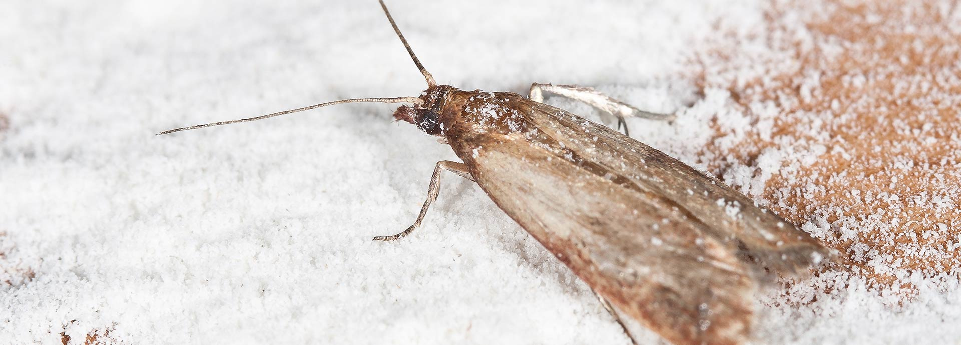 Mottenbekämpfung