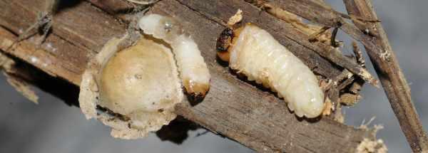Holzwurm- & Hausbockbekämpfung